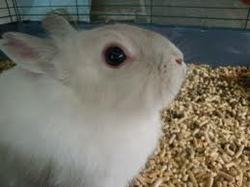 Crousty, rongeur Lapin