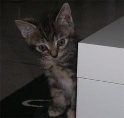 Knocki, chat Gouttière