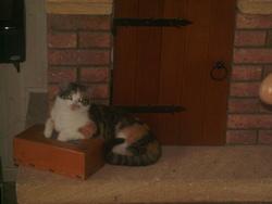 Kannelle, chat Gouttière