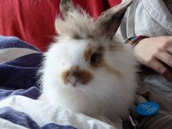 Andy, rongeur Lapin