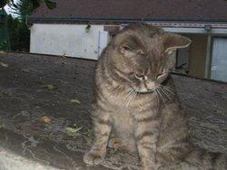 Bijou, chat Gouttière
