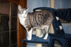 Aldo, chat Gouttière