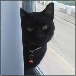 Satsuki, chat Gouttière