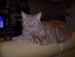 Kyubi, chat Gouttière