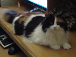 Yanie, chat Gouttière