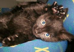 Sushy, chat Gouttière