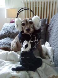 Lili, chien