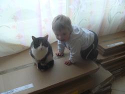 Cassie, chat Gouttière
