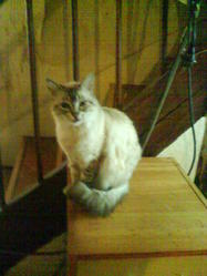 Sissi, chat Gouttière