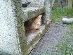 Pépétte, chat