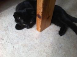 Ploum, chat Gouttière