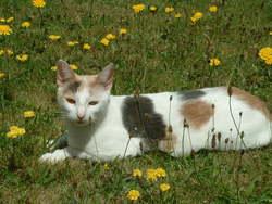 Arkana, chat Gouttière