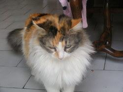 Ma Belle, chat