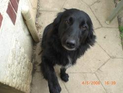 Tétis, chien Border Collie