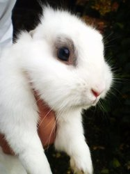 Lucky, rongeur Lapin