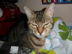 Ashley, chat Gouttière