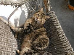 3 Pattes, chat Gouttière