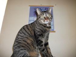 Némésis, chat Gouttière