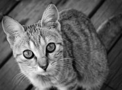 Foufoune, chat