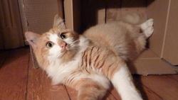 Jéricho, chat Gouttière