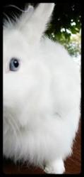 Yuuki, rongeur Lapin