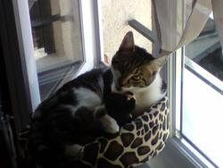 Bouchon, chat