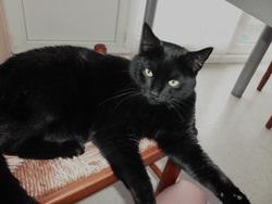 Ronnie, chat Gouttière