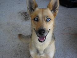 Sandy, chien