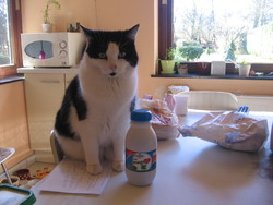 Chimene, chat Gouttière