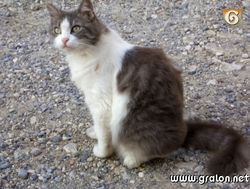 Minette, chat