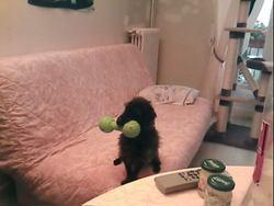 Axel, chien