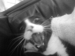 Smirnoff, chat Gouttière