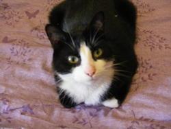 Pico, chat Gouttière