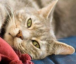 Globinours, chat Gouttière