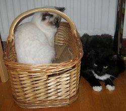 Sanhgo, chat Gouttière