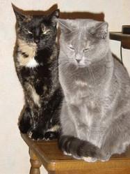 Sheba Et Rustine, chat