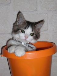 Etoile, chat