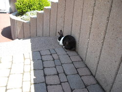 Bugsy, rongeur Lapin