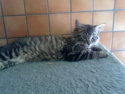 Louki, chat Gouttière