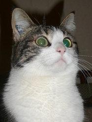 Titmousse, chat Gouttière