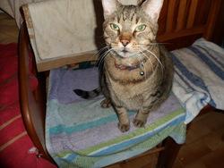 Volcan, chat Gouttière