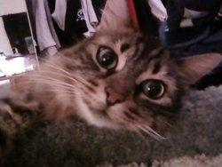 Arthur, chat Gouttière