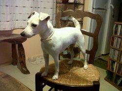 Betty Du Bois Des Carnutes, chien Jack Russell Terrier