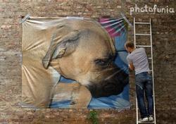 Akita, chien Boxer