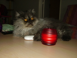 Crystal, chat Persan