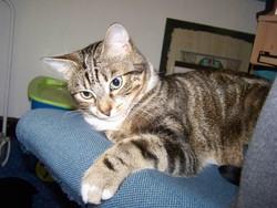 Jasper, chat Gouttière