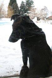Titus, chien Beauceron
