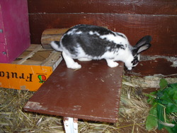 Pouffy, rongeur Lapin