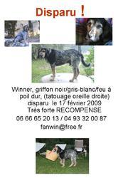 Winner, chien Bleu de Gascogne
