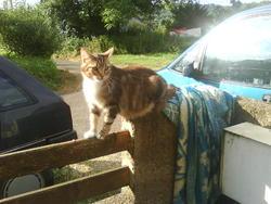 Mirlitti, chat Gouttière